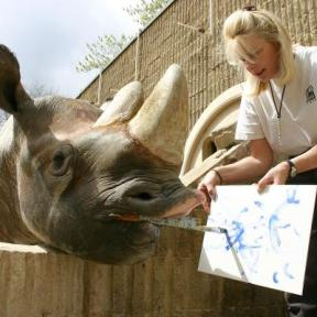 painting-rhino.jpg.resize.400