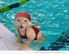 cats-swimming668039