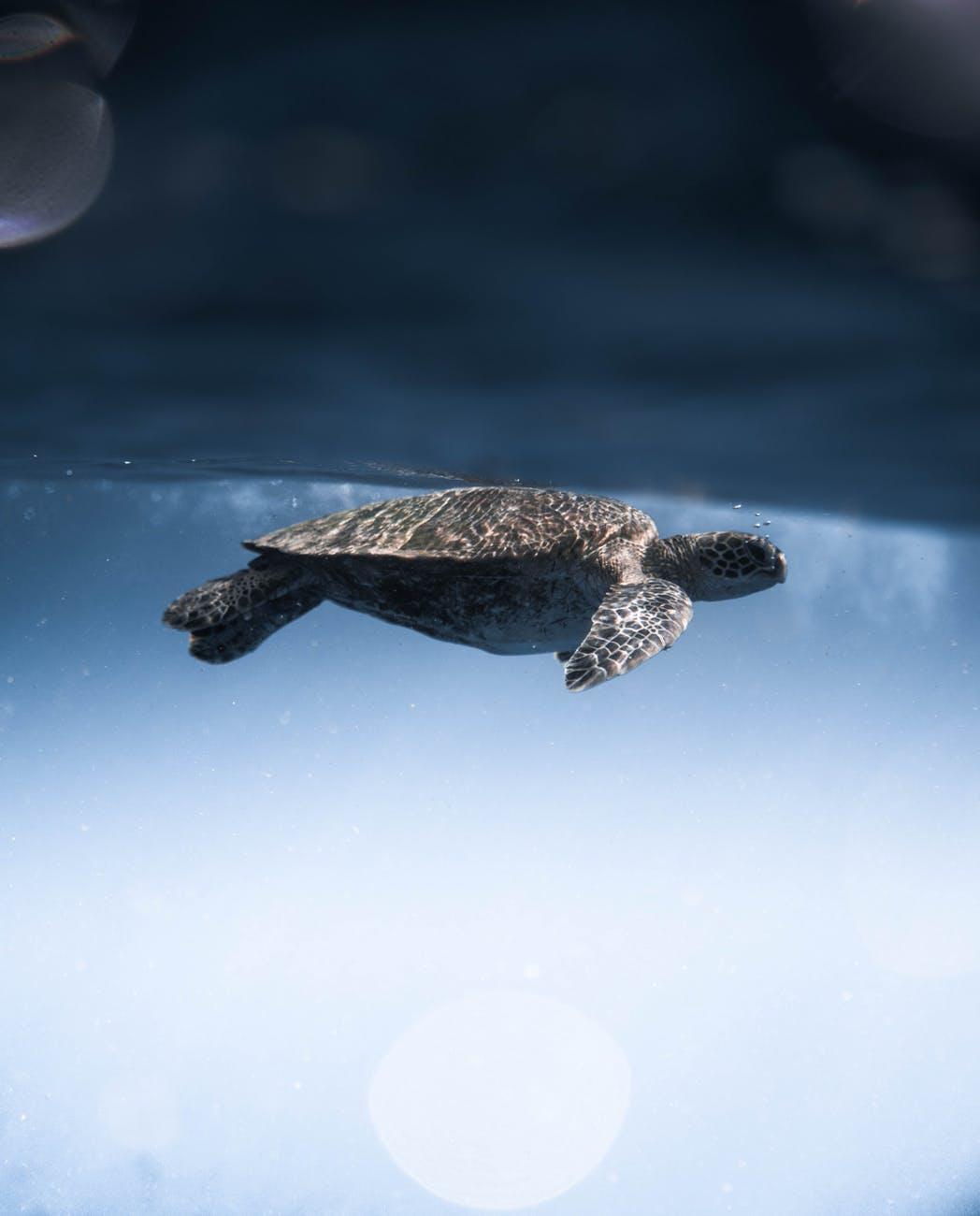 'Extinct' giant tortoise rediscovered thanks to Abu Dhabi grant — Abu Dhabi Magazine